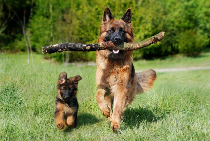 Schlaganfall nach Hundebiss – Hundebesitzer haftet