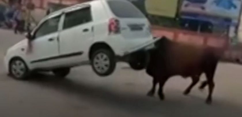 Vergesst die Farbe Rot: Stiere hassen Autos