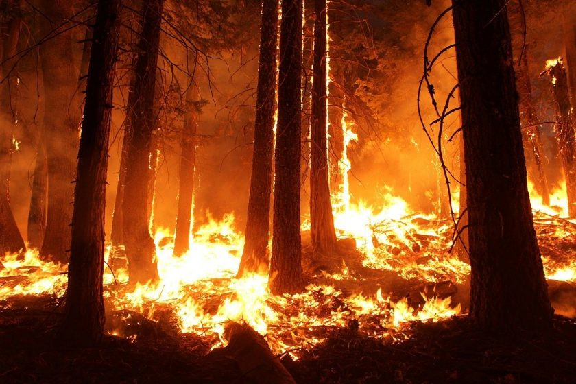 Australiens Höllenfeuer kostet Versicherer bislang 600 Mio. Dollar
