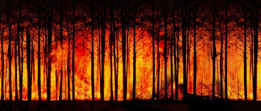 """WEF warnt vor """"Klima-Feuer und politischen Flammenkriegen"""""""