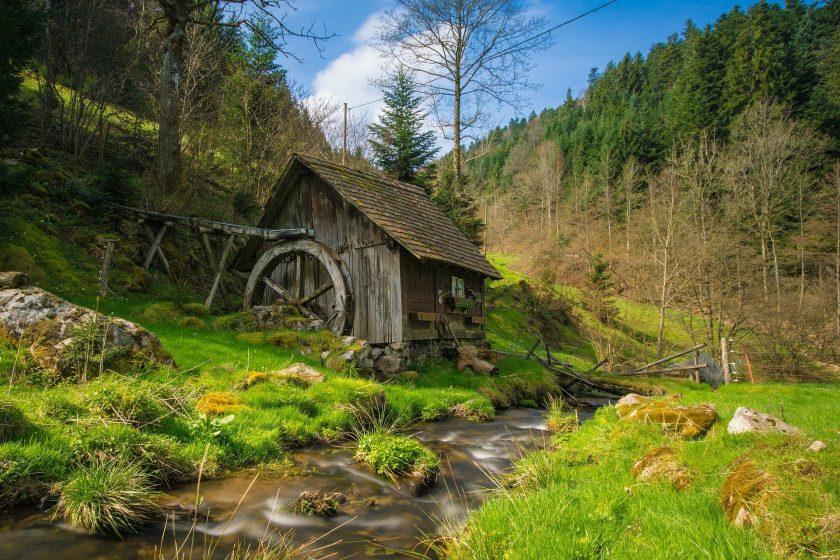 Ist die Schwarzwälder Versicherung der Trendsetter bei grünen Versicherungsprodukten?