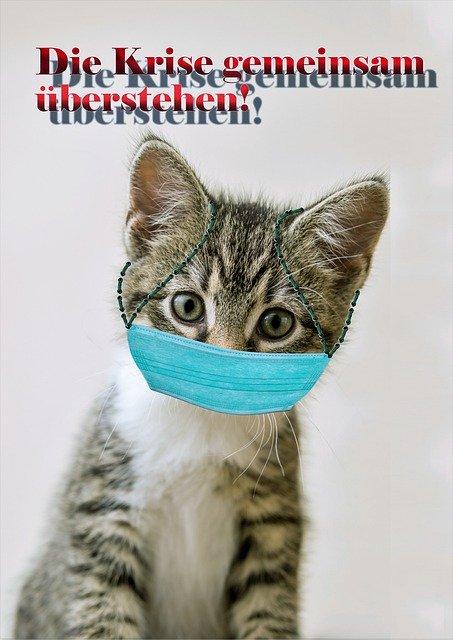 Keine Maske für die Miezekatze: Uelzener Versicherungen mahnt zu Bedacht