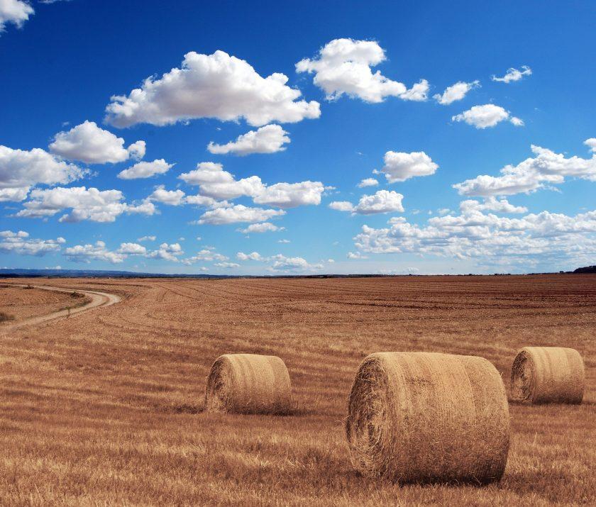 Hagelgilde: Landwirte werden für Risikoabsicherung sensibler