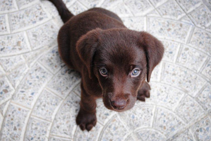 Clark-Umfrage: Hundeversicherung stärker gefragt als BU