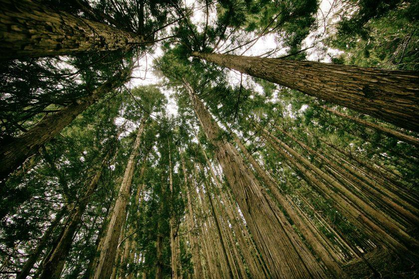 Nachhaltigkeit: Zurich sieht sich in der Pflicht, neue Impulse in den Markt zu tragen