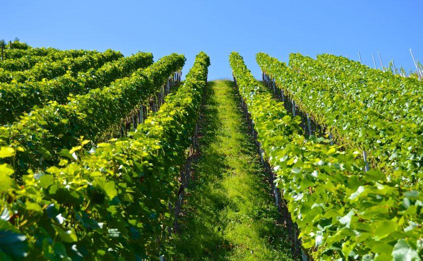 Bayern will Obstbauern und Winzer bei Versicherungsschutz unterstützen