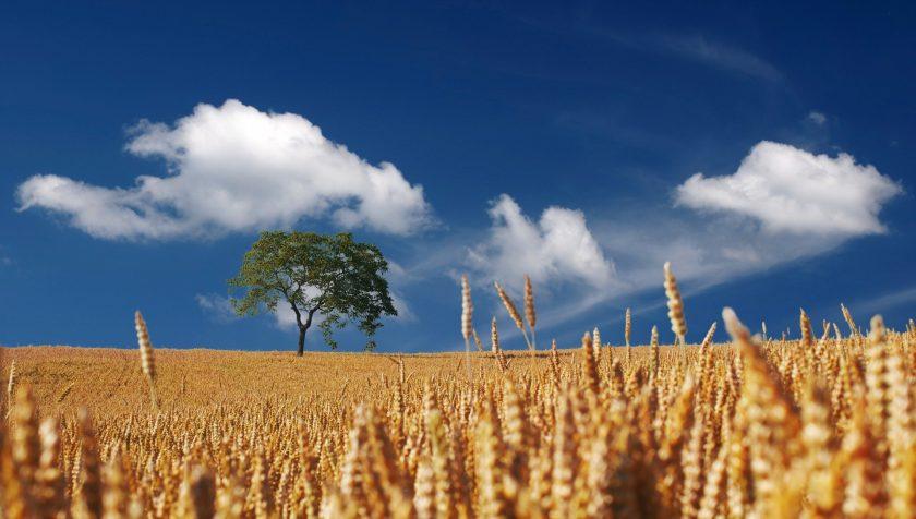 Hagelschaden auf 20.000 Hektar: Bauernverband ruft zu Absicherung auf