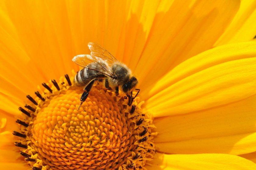 Mehr als nur Bienen und Blumen: Alte Leipziger macht bei Nachhaltigkeit ernst