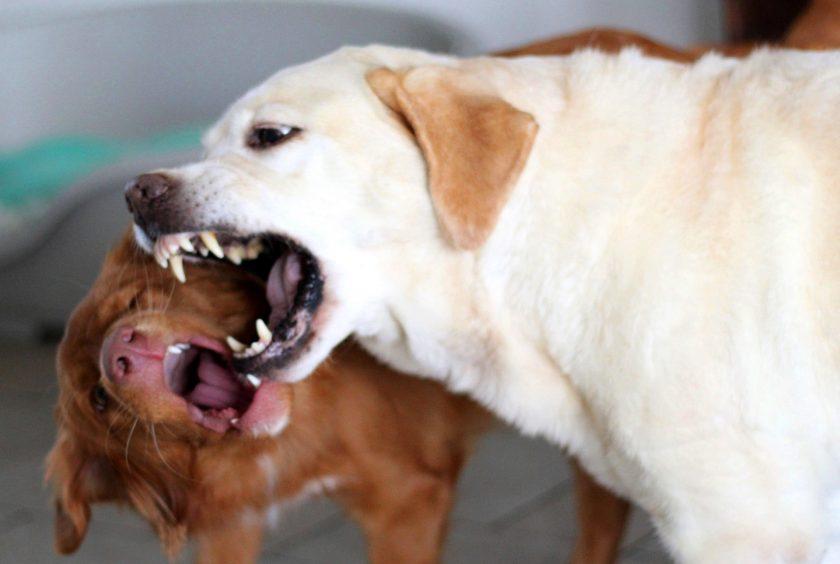 OLG Frankfurt: Versicherer muss 100.000 Euro für Hundebiss zahlen