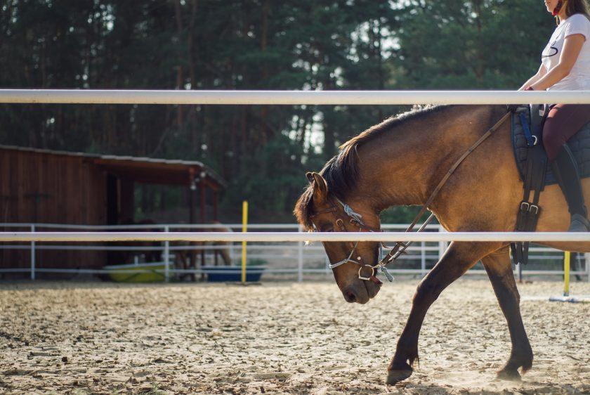 """Nischenmarkt Pferdeversicherung: """"Der Kunde spürt, wer fachlich qualifiziert und mit Leidenschaft dabei ist"""""""