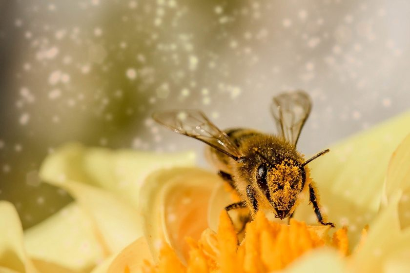 Landwirtschaft: Insektensterben verursacht jährlich knapp 850 Mrd. Euro Schäden weltweit