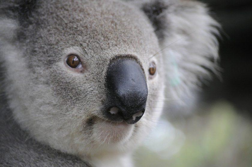 Zwei-Dekaden-Tief: Australische Versicherer verlieren ein Fünftel an Profitabilität
