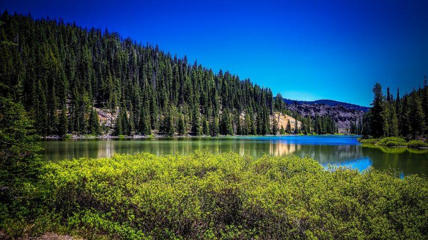 MEAG investiert in Waldstück im US-Bundesstaat Oregon