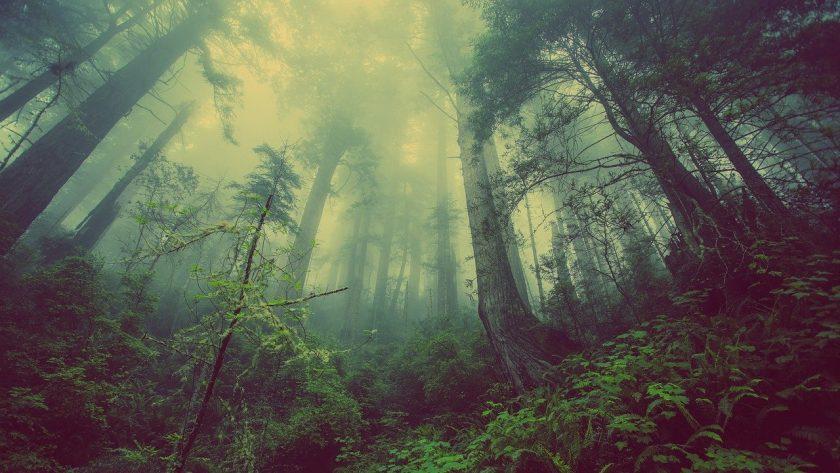 Pilzsucherin stolpert im Wald über alte Zaunreste – wer haftet?