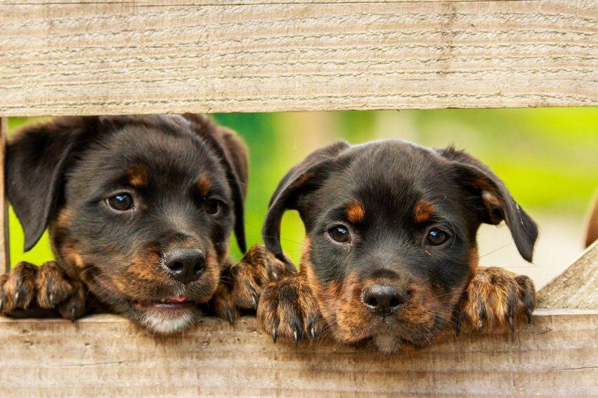 Tierisch gutes Geschäft: Zweistelliges Wachstum bei Tierversicherungen